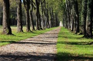 trees-451089_1280